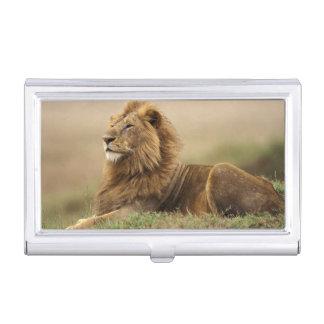 Étui Pour Cartes De Visite Le Kenya, masai Mara. Lion de mâle adulte sur le