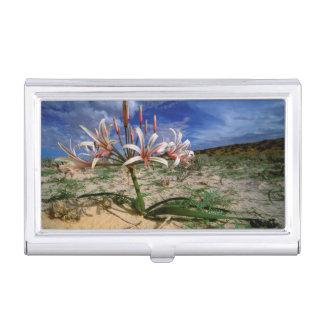 Étui Pour Cartes De Visite Lis de Vlei (Nerine Laticoma) en fleur