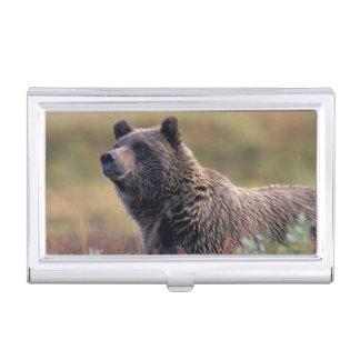 Étui Pour Cartes De Visite Na, Etats-Unis, Alaska, Denali NP, ours gris