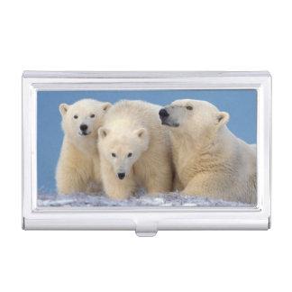 Étui Pour Cartes De Visite ours blanc, maritimus d'Ursus, truie avec des