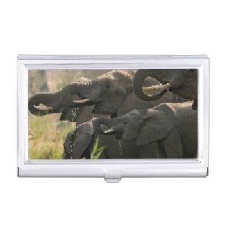 Étui Pour Cartes De Visite Un troupeau d'éléphants africains (Loxodonta