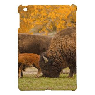 Étuis iPad Mini Nation de famille de bison