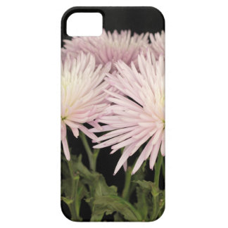 Étuis iPhone 5 Fleurs blanches violettes de chrysanthème sur le