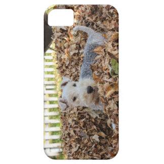 Étuis iPhone 5 Fox Terrier de câble mignon