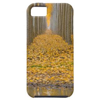 Étuis iPhone 5 _MG_3099aReflection à la ferme d'arbre de peuplier