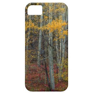 Étuis iPhone 5 Plancher rouge de forêt