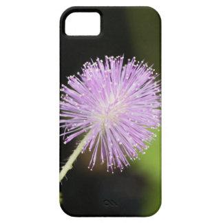 Étuis iPhone 5 Plante sensible (pudica de mimosa)