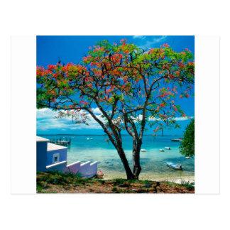 Évasion tropicale Bahamas d'île tropicale Cartes Postales