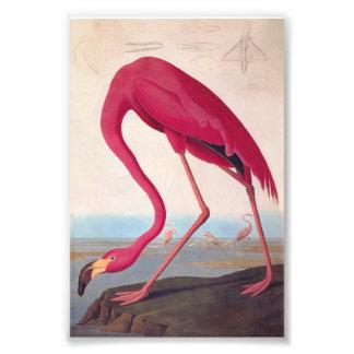 Ex-libris rose américain de cru d'Audubon de Photo D'art