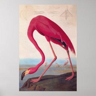Ex-libris rose américain de cru d'Audubon de Posters