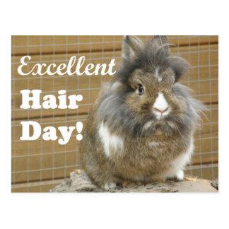 """""""Excellent jour de cheveux"""" drôle pour le lapin Carte Postale"""