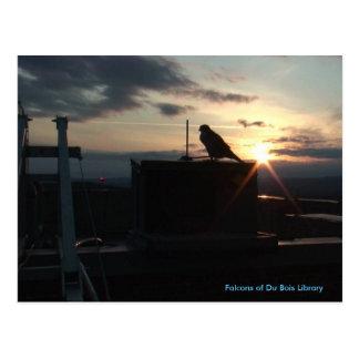 Falcons de carte postale de Du Bois Library