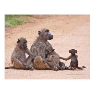 Famille de babouin se reposant sur la terre cartes postales