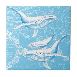 Famille de baleines bleues petit carreau carré
