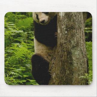Famille de melanoleuca d'Ailuropoda de panda géant Tapis De Souris