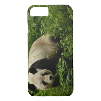 Famille de panda géant (melanoleuca d'Ailuropoda) Coque iPhone 7