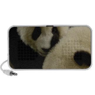Famille de panda géant (melanoleuca d'Ailuropoda)  Haut-parleurs De Voyage