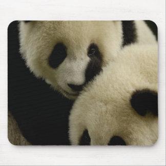 Famille de panda géant (melanoleuca d'Ailuropoda)  Tapis De Souris