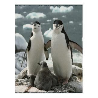 Famille de pingouin carte postale