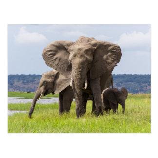 Famille d'éléphant africain, Botswana, carte