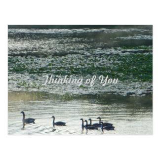 Famille des oies du Canada pensant à vous Carte Postale