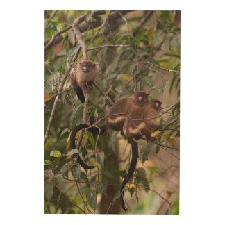 Famille des singes d'ouistiti impression sur bois