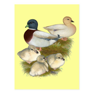 Famille en pastel de canard d'appel carte postale