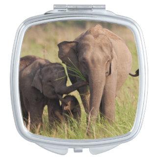 Famille indienne d'éléphant asiatique dans la miroirs de voyage
