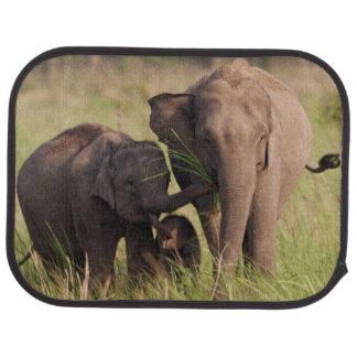 Famille indienne d'éléphant asiatique dans la tapis de sol