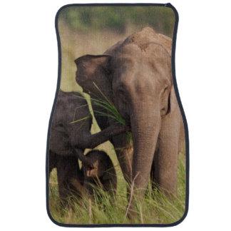Famille indienne d'éléphant asiatique dans la tapis de voiture