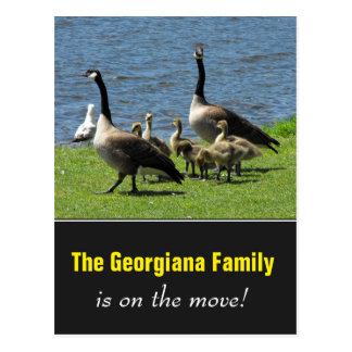 Famille sur le mouvement + Oies du Canada sur Carte Postale