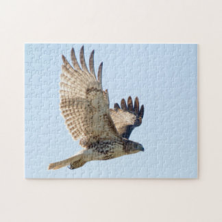 Faucon coupé la queue par rouge dans le fligh puzzle