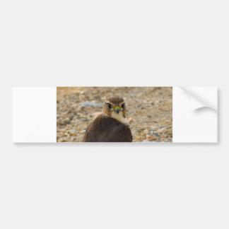 Faucon de pigeon autocollant de voiture