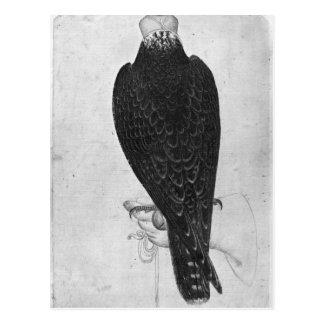 Faucon en main carte postale