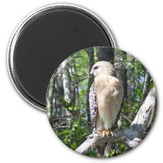 Faucon épaulé rouge magnet rond 8 cm