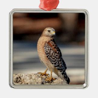 Faucon épaulé rouge sur une roche ornement carré argenté