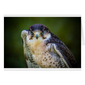 Faucon pérégrin carte de vœux