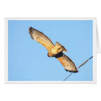 faucon Rouge-épaulé Carte De Vœux