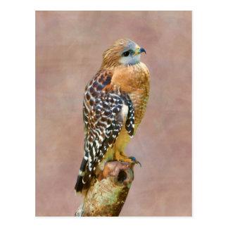 Faucon Rouge-Épaulé Carte Postale