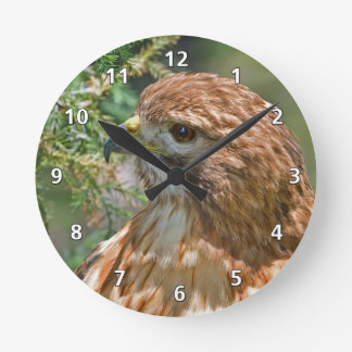 faucon Rouge-épaulé Horloge Ronde