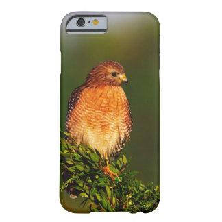 faucon Rouge-épaulé (lineatus de Buteo) dedans tôt Coque Barely There iPhone 6