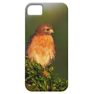 faucon Rouge-épaulé (lineatus de Buteo) dedans tôt Coque iPhone 5