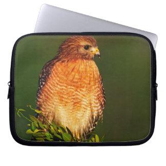 faucon Rouge-épaulé (lineatus de Buteo) dedans tôt Housse Pour Ordinateur Portable