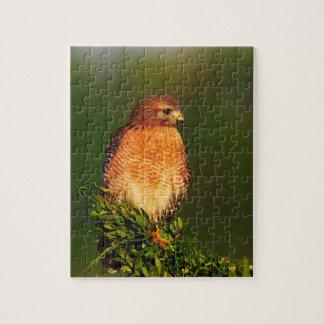 faucon Rouge-épaulé (lineatus de Buteo) dedans tôt Puzzle Avec Photo