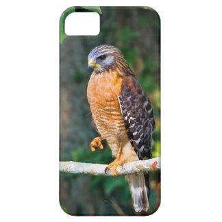 Faucon Rouge-Épaulé sur un membre Coque iPhone 5