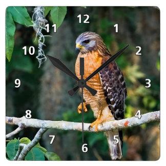 Faucon Rouge-Épaulé sur une horloge de membre