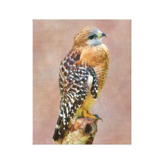 Faucon Rouge-Épaulé Impressions Sur Toile