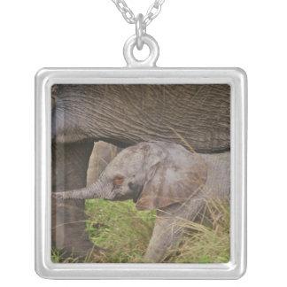 Faune de l'Afrique, Kenya, éléphant de bébé Pendentif Carré