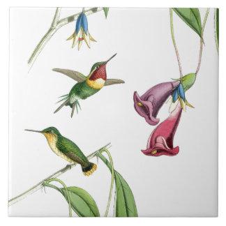 Faune florale d'animaux de fleurs d'oiseaux de carreau