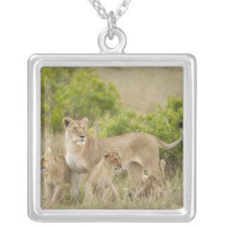 Femelle adulte de lion africain avec des petits pendentif carré